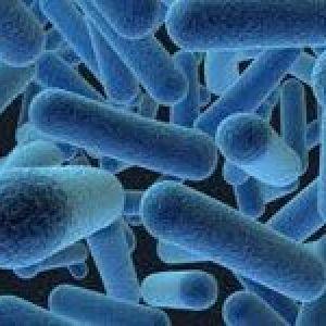 Бактерії в сечі