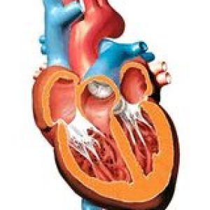 Легеневе серце при туберкульозі