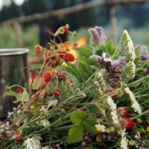 Трави і відвари від головного болю